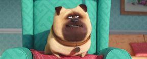 """""""Pets"""": Super-Bowl-Trailer zum neuen Film der """"Minions""""-Macher"""