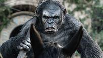 """Unter Disney: Nächster """"Planet der Affen""""-Film soll ein (weiterer) Reboot werden!"""