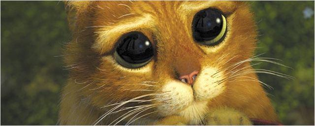 Quiz: Erkennt ihr die Filme und Serien nur an der Katze?