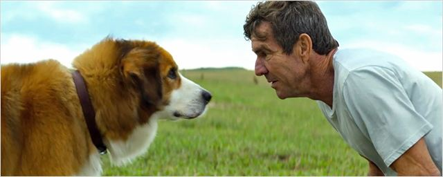 """Gleich zwei deutsche Trailer zu Lasse Hallströms """"Bailey - Ein Freund fürs Leben"""" über einen Hund, der wiedergeboren wird"""