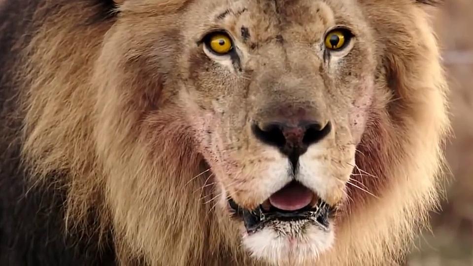 Serie Zoo Trailer